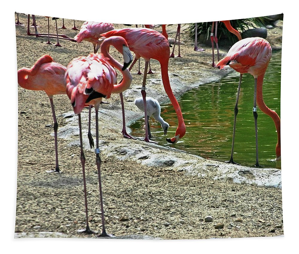 Zoo Tapestry featuring the photograph Flamingos by Hugh Carino