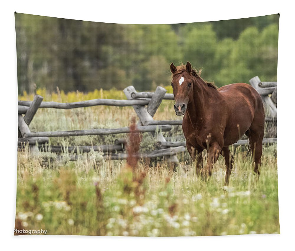 Grand Teton National Park Tapestry featuring the photograph Flirty Sorrell by Yeates Photography