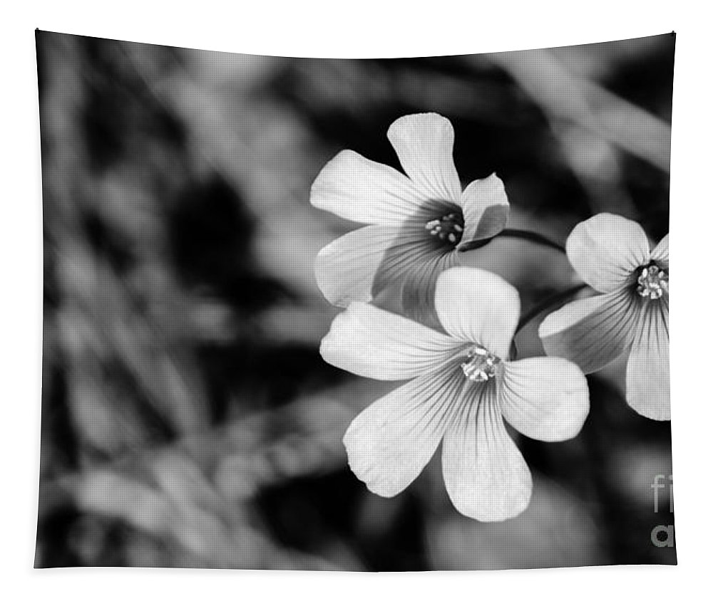 Blossom Tapestry featuring the photograph Floral Black And White by Andrea Anderegg