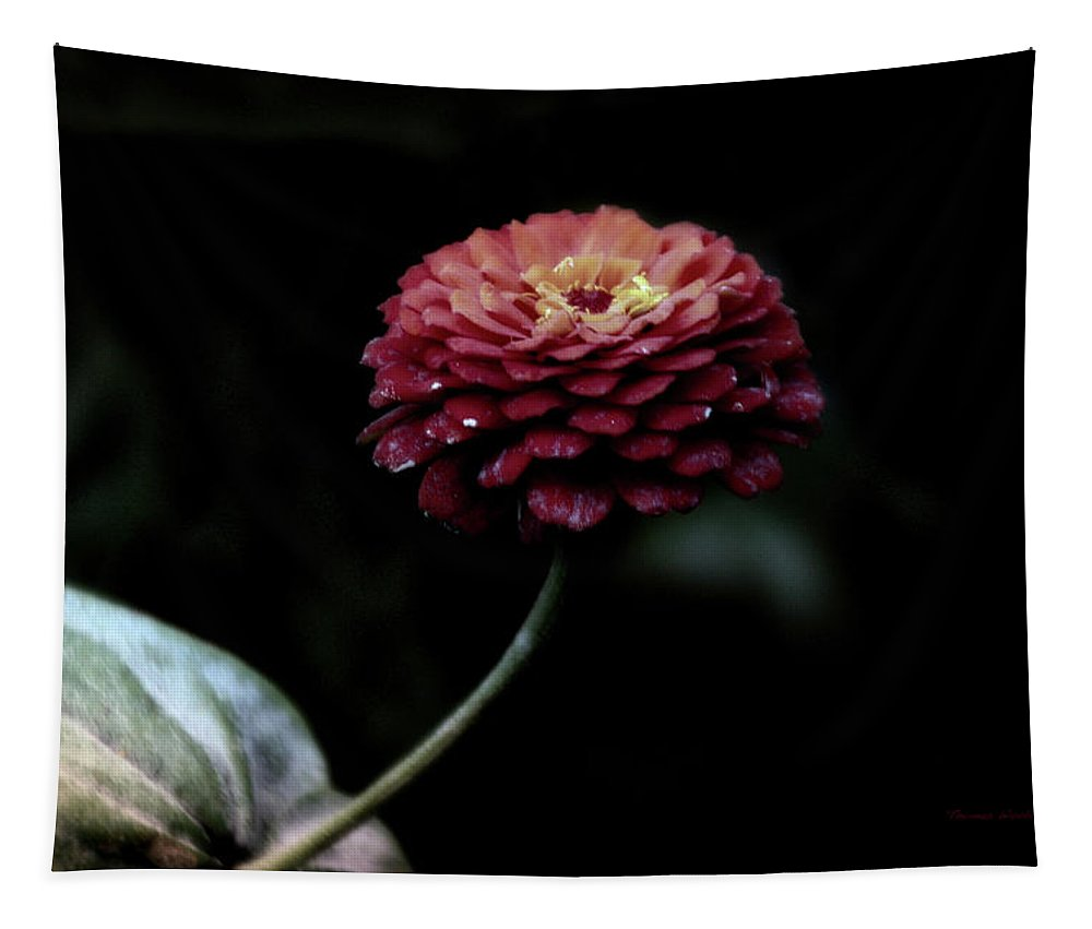 Zinnia Tapestry featuring the photograph Floral October Zinnia End Of Season Deep Red 03 by Thomas Woolworth