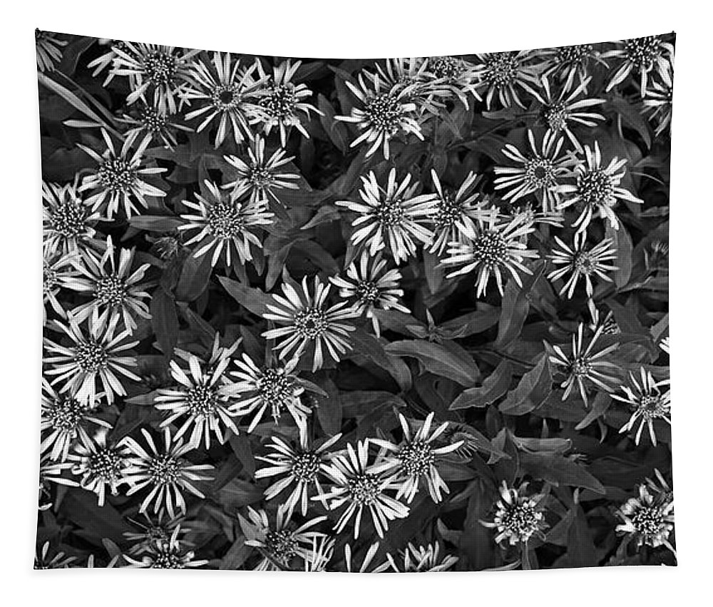 Aster Sibiricus Tapestry featuring the photograph Flower Carpet by Priska Wettstein