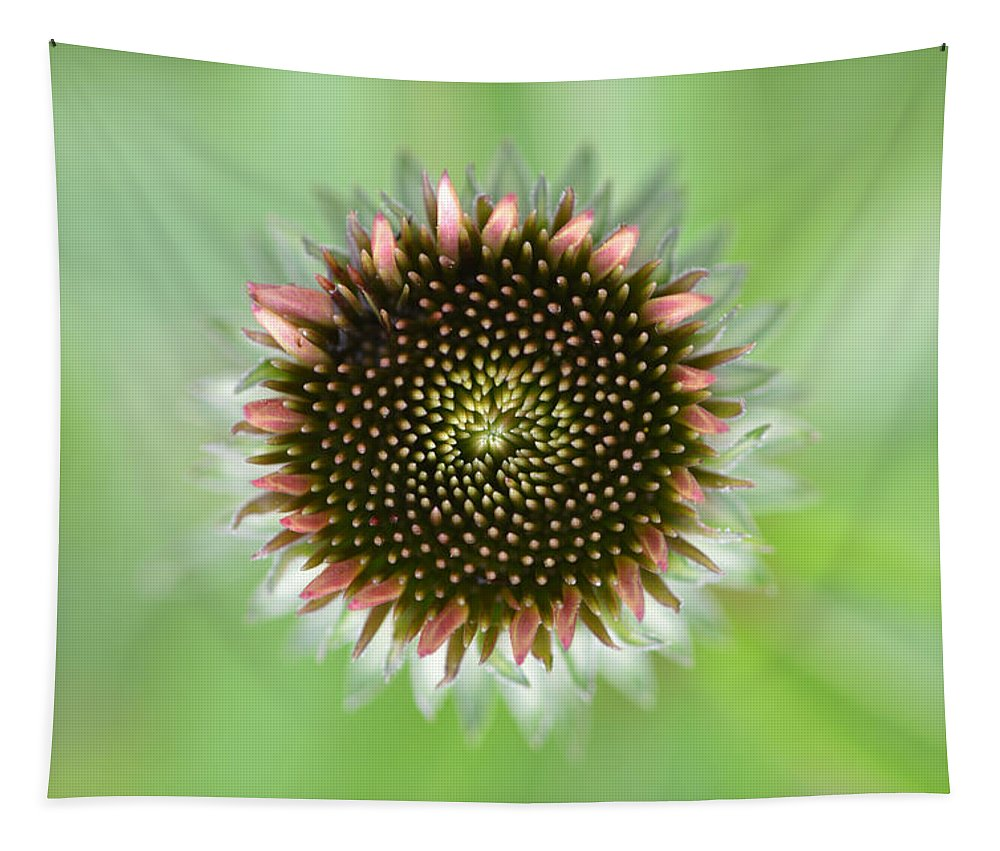 Flower Tapestry featuring the photograph Flower Face by Barbara Treaster