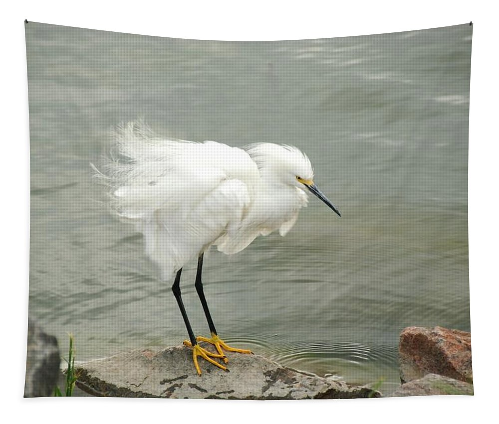 Snowy Egret Tapestry featuring the photograph Fluffy Snowy Egret by Katherine Nutt