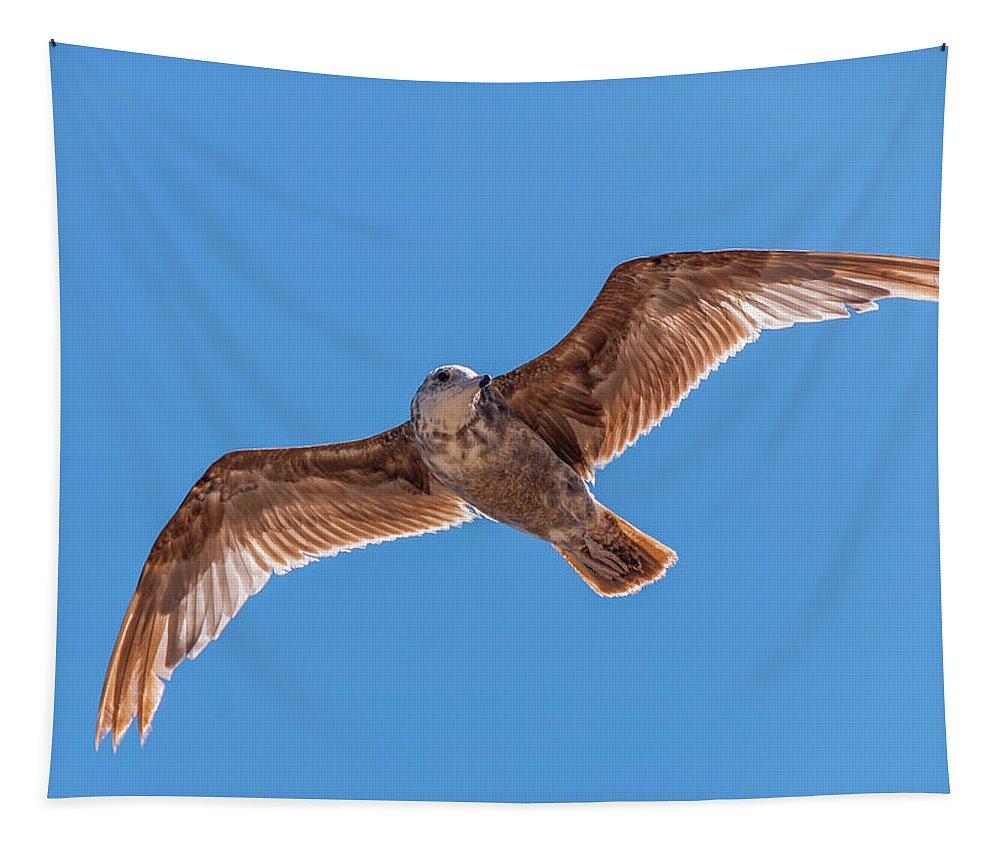 Animal Tapestry featuring the photograph Flying Gull by Marv Vandehey