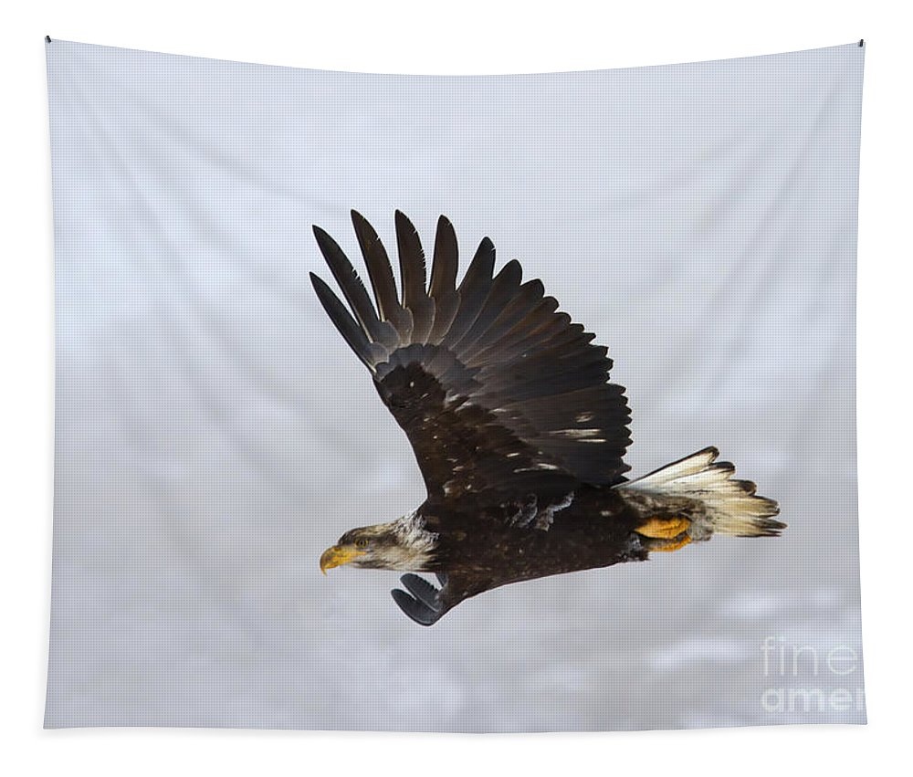 Eagle Tapestry featuring the photograph Foggy Flight by Mike Dawson