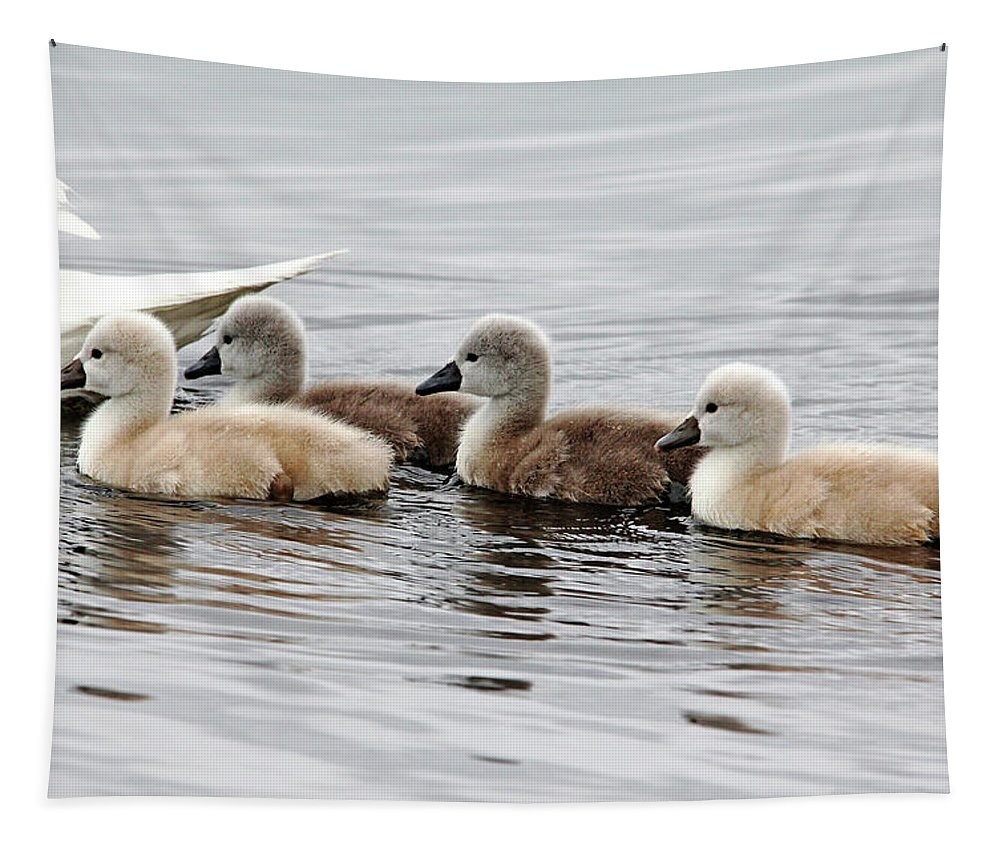Mute Swans Tapestry featuring the photograph Follow Mom by Debbie Oppermann