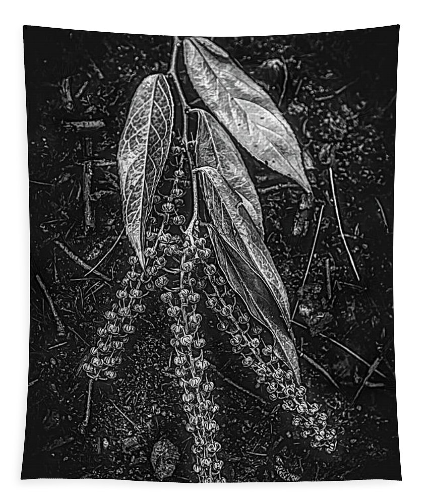 Appalachia Tapestry featuring the photograph Forest Botanicals In Black And White by Debra and Dave Vanderlaan