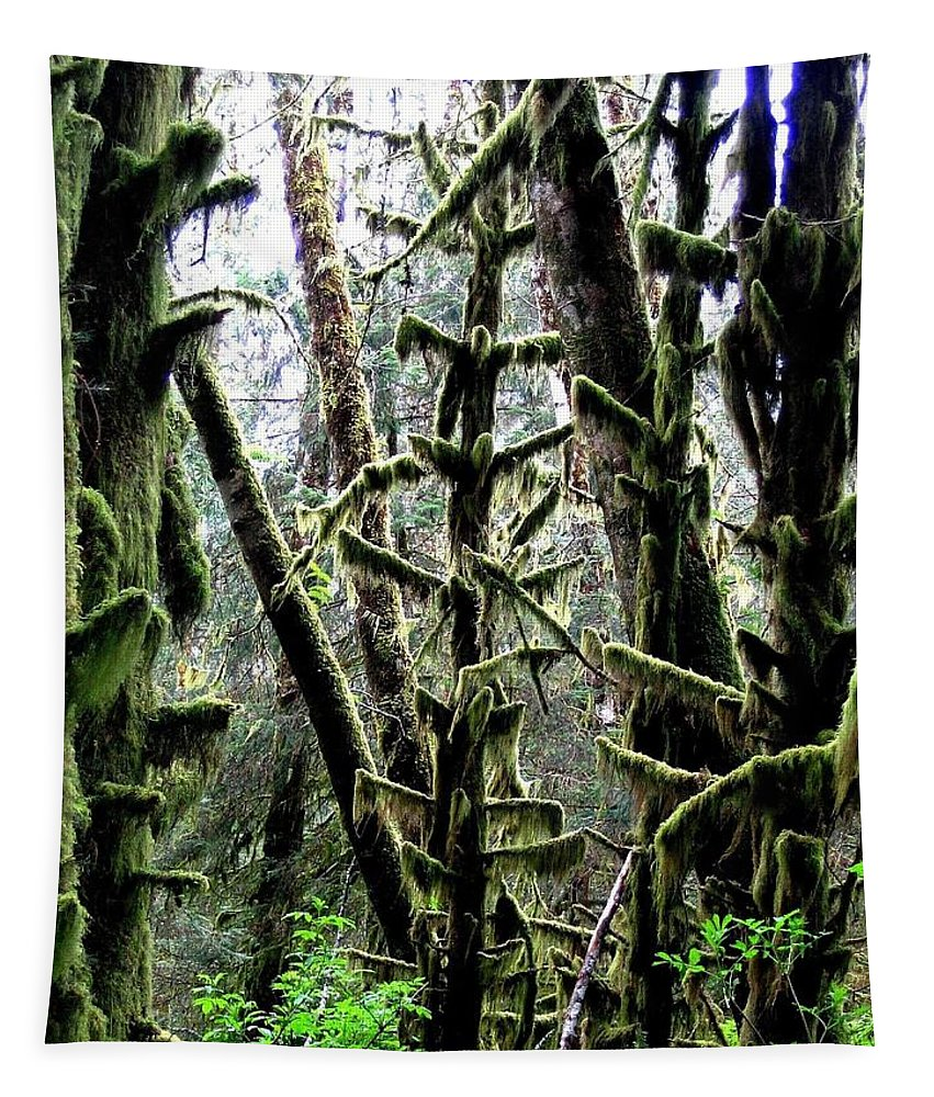 Ecola State Park Tapestry featuring the photograph Forest Finery by Will Borden