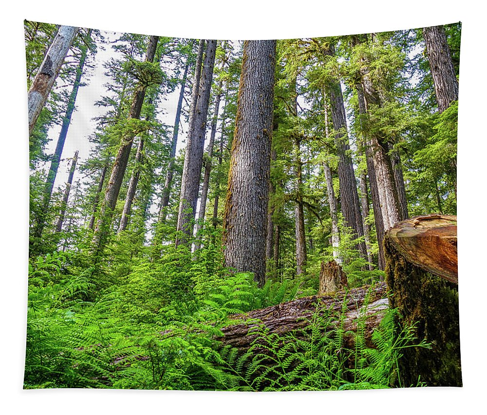 Forest Floor Tapestry featuring the photograph Forest Floor Of Hoh Rain Forest by Dan Sproul