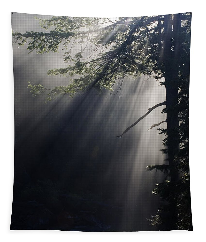 Sunlight Tapestry featuring the photograph Forest Rays by Tony Beaver