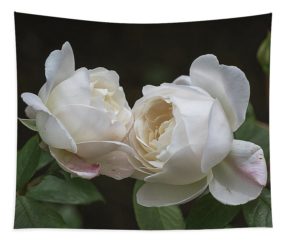 Alnwick Tapestry featuring the photograph Forever And Always - Desdemona Roses by Teresa Wilson