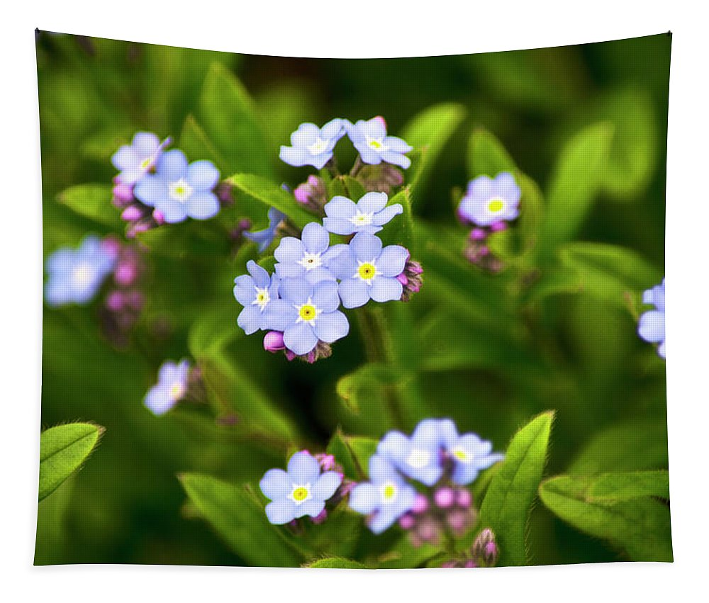 Flower Tapestry featuring the photograph Forget Me Nots by Christina Rollo