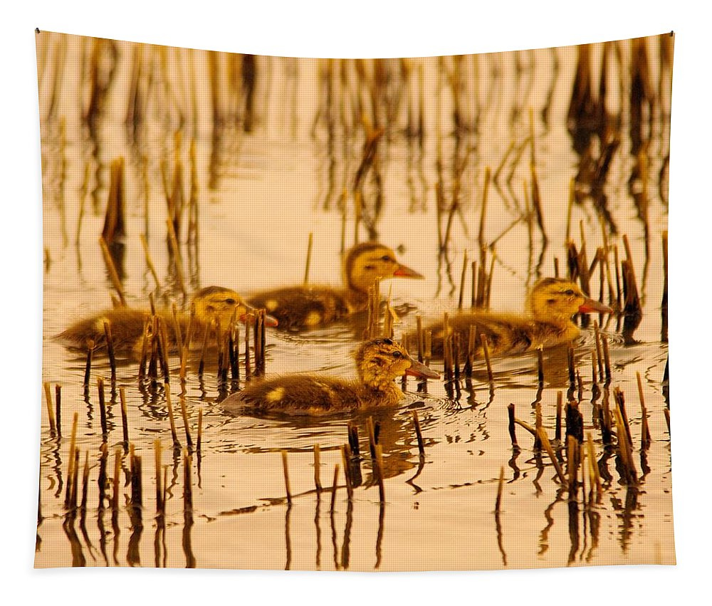 Ducks Tapestry featuring the photograph Four Baby Duckies by Jeff Swan