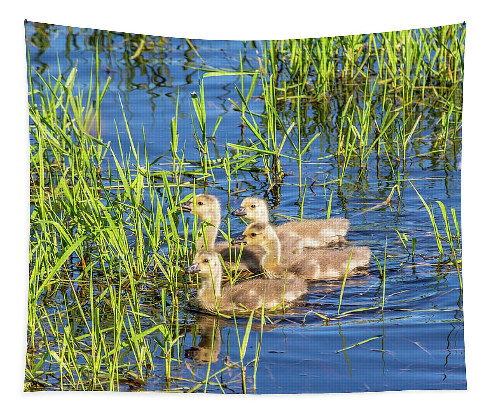 Animal Tapestry featuring the photograph Four Goslings by Marv Vandehey