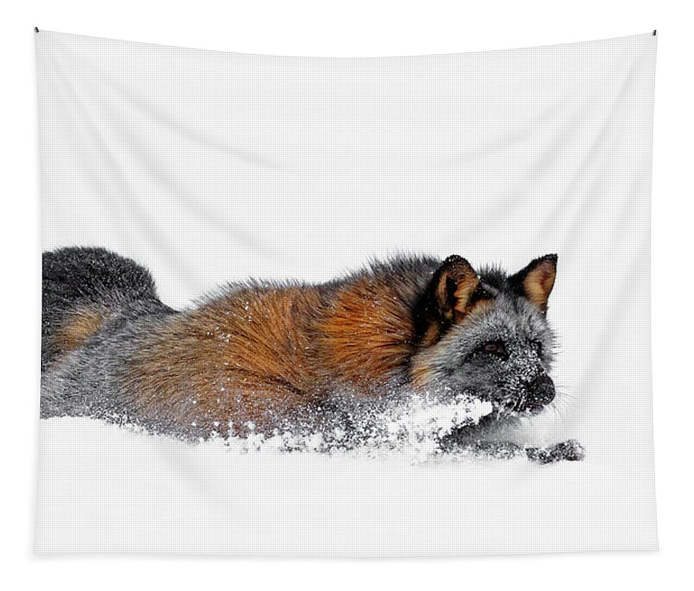 Fox On A Mission Tapestry featuring the photograph Fox On A Mission by Wes and Dotty Weber