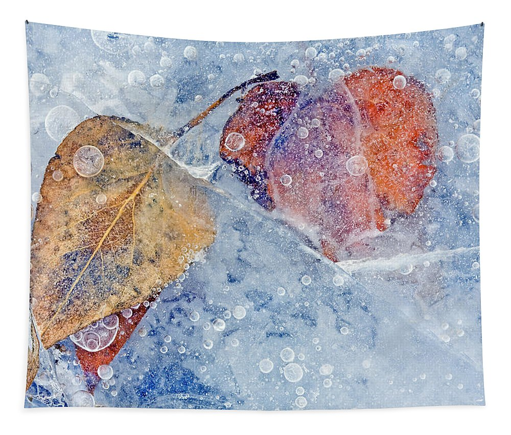 Ice Tapestry featuring the photograph Fractured Seasons by Mike Dawson