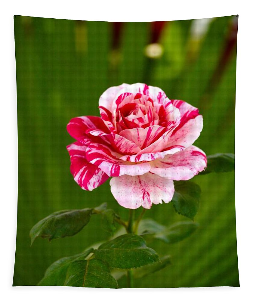 Shades Tapestry featuring the photograph Fragrant Pink by Sonali Gangane