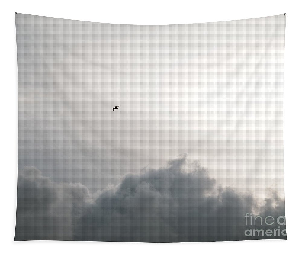 Sky Tapestry featuring the photograph Free To Soar by Rachel Morrison