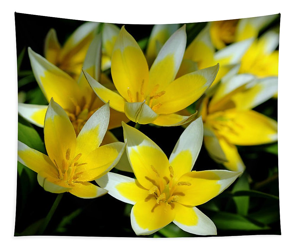 Tulips Tapestry featuring the photograph Fried Eggs by Debbie Oppermann