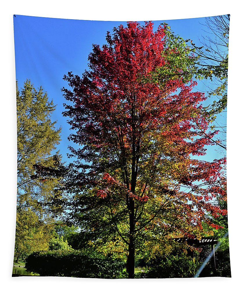 Autumn Tapestry featuring the photograph From Green To Red by Maria Keady