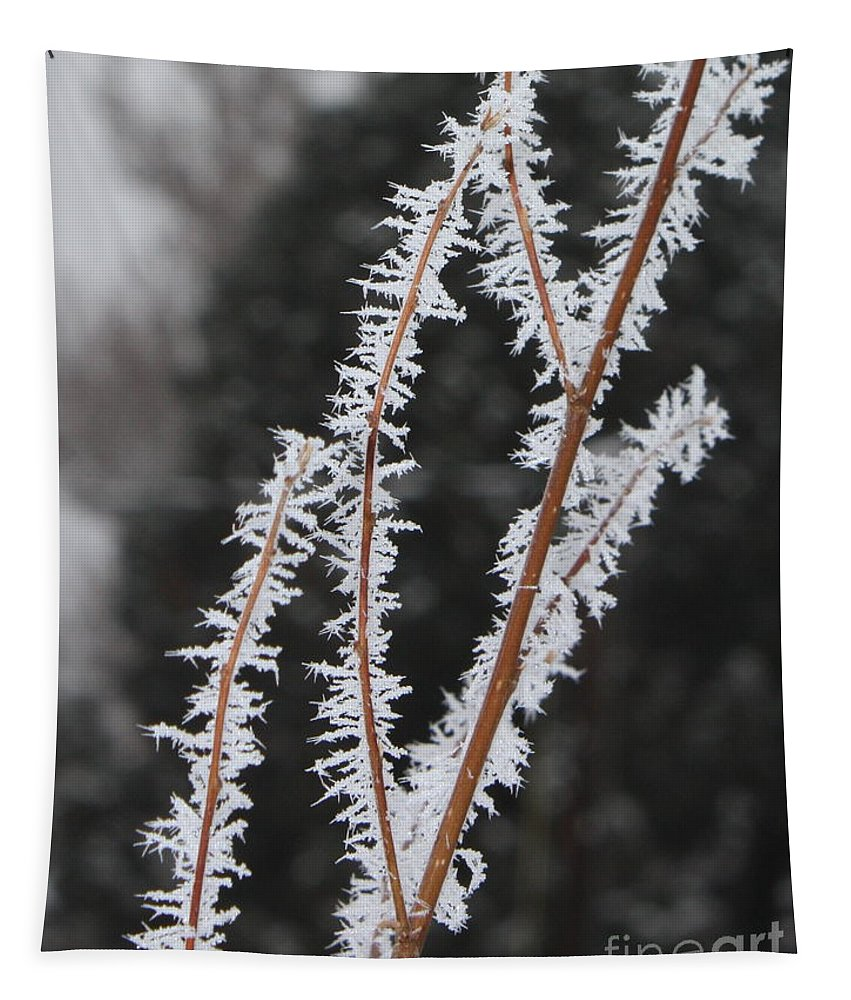 Frost Tapestry featuring the photograph Frosty Branches by Carol Groenen
