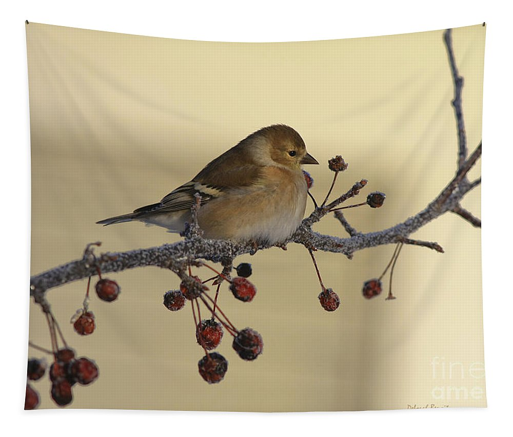 Finch Tapestry featuring the photograph Frosty Perch by Deborah Benoit