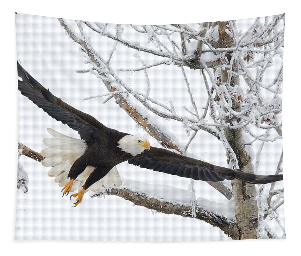 Bald Eagle Tapestry featuring the photograph Frosty Take-off by Mike Dawson