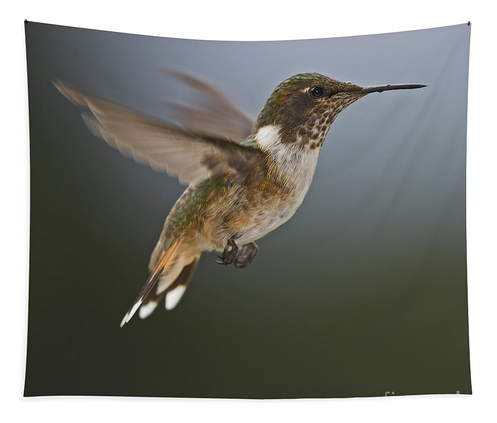 Volcano Hummingbird Tapestry featuring the photograph Frozen In Time.. by Nina Stavlund