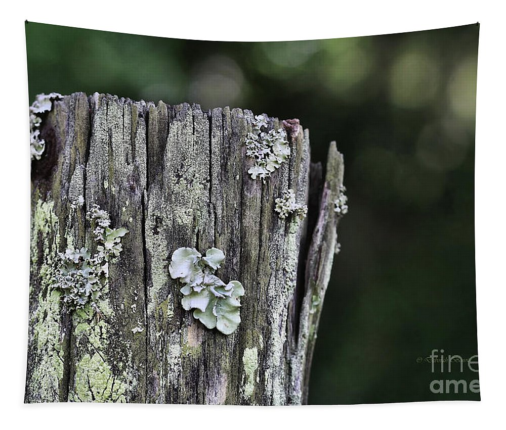 Fungi Tapestry featuring the photograph Fungi Green by Deborah Benoit