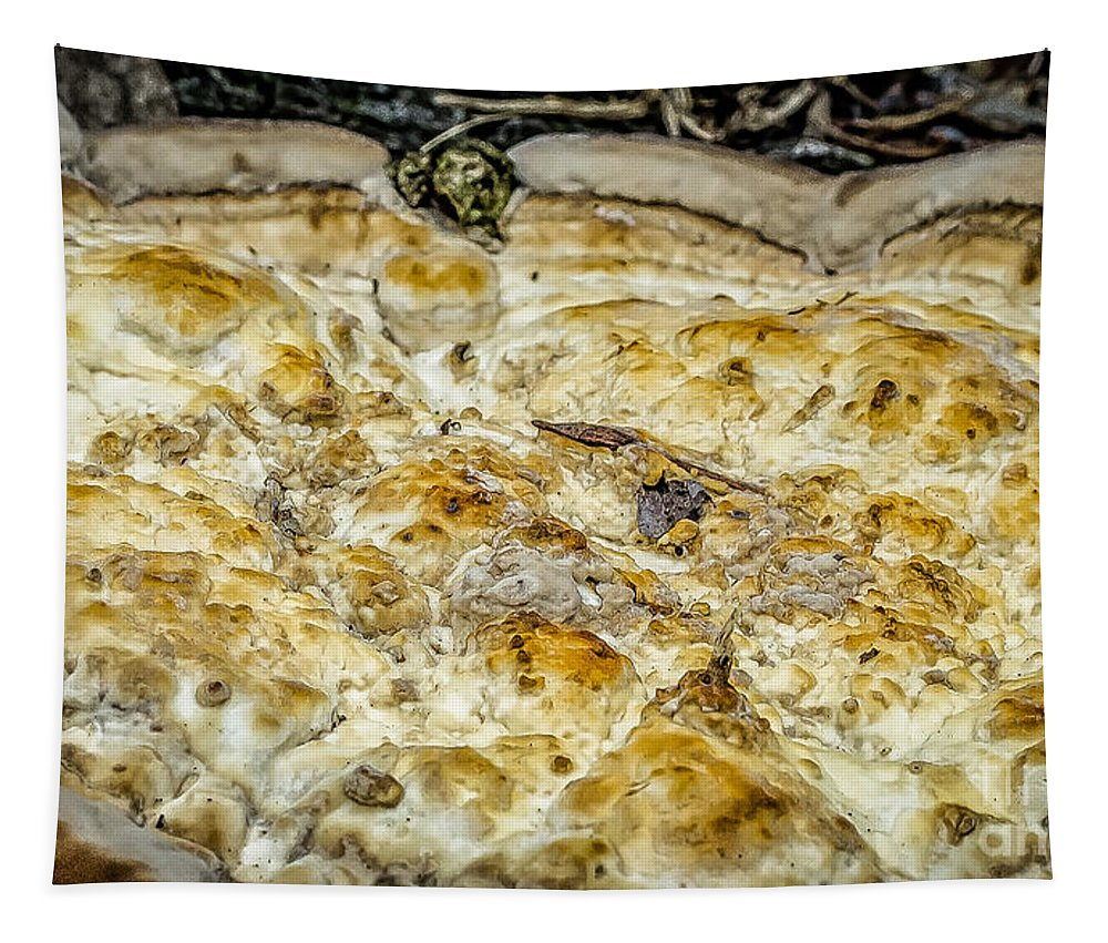 Fungus Tapestry featuring the photograph Fungus Pizza by Kathleen K Parker