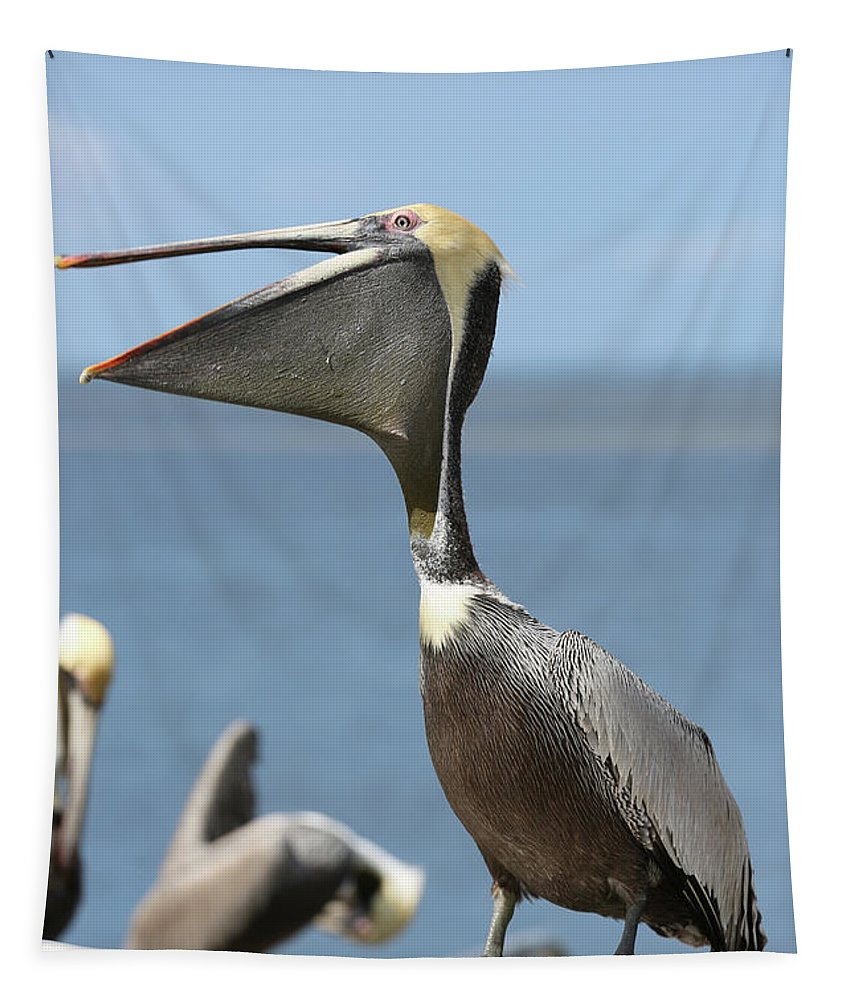 Brown Pelican Tapestry featuring the photograph Funny Brown Pelican by Carol Groenen