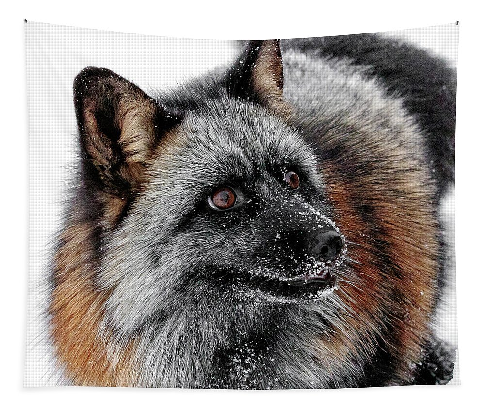Funny Little Furry Face Tapestry featuring the photograph Funny Little Furry Face by Wes and Dotty Weber