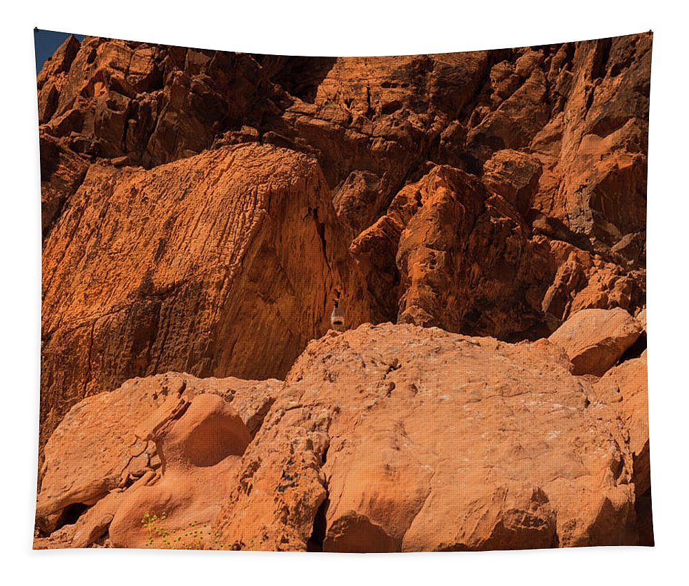 Landscape Tapestry featuring the photograph Gambels Quail Valley Of Fire by Frank Wilson