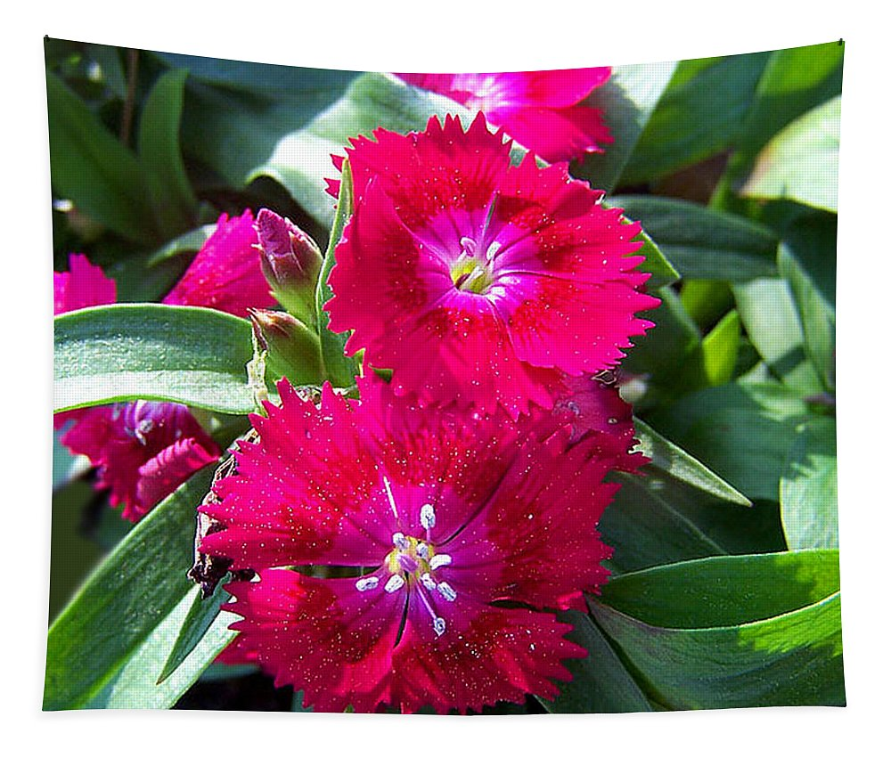 Dianthus Tapestry featuring the photograph Garden Delight by Sandi OReilly