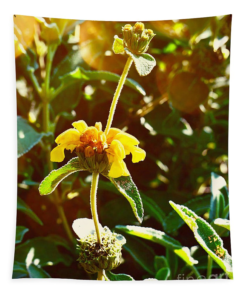 Garden Tapestry featuring the photograph Garden Yellow by Gary Richards