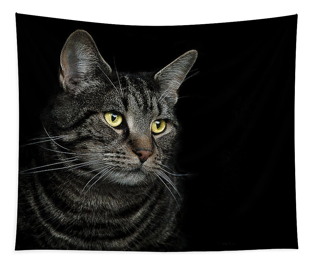 Cat Tapestry featuring the photograph Gaze by Paul Neville