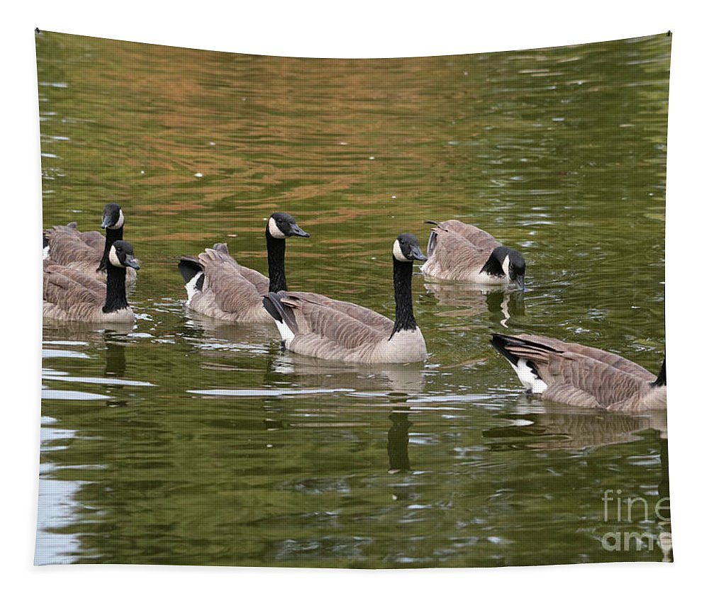 Canada Goose Tapestry featuring the photograph Geese On Pond by Carol Groenen