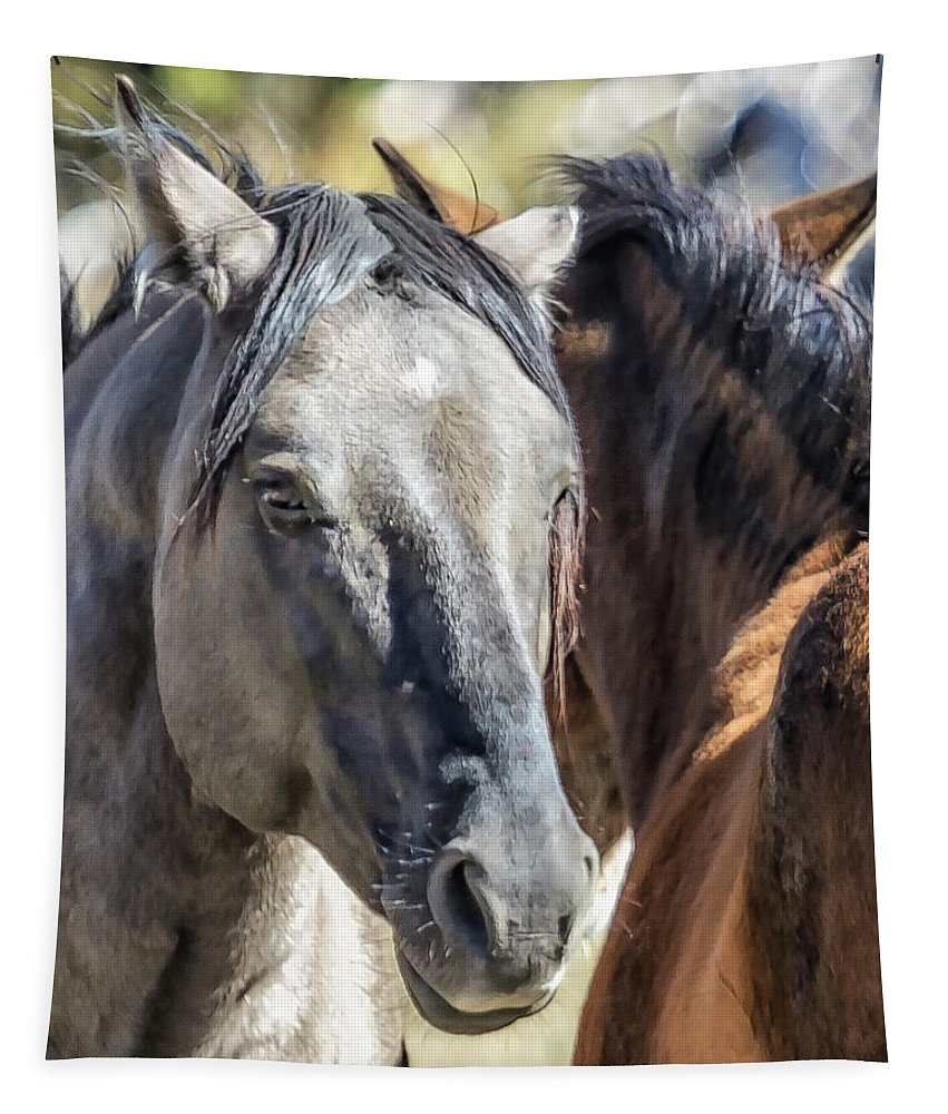 Wild Horses Tapestry featuring the photograph Gentle Face Of A Wild Horse by Belinda Greb