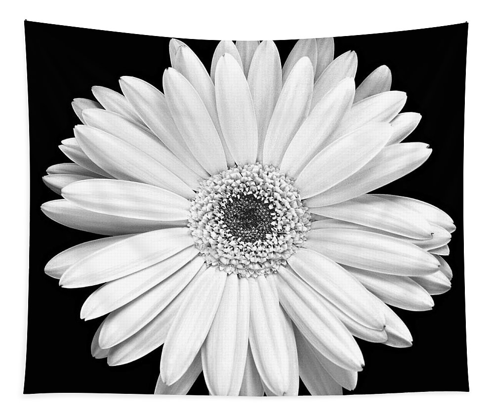 Gerber Tapestry featuring the photograph Single Gerbera Daisy by Marilyn Hunt