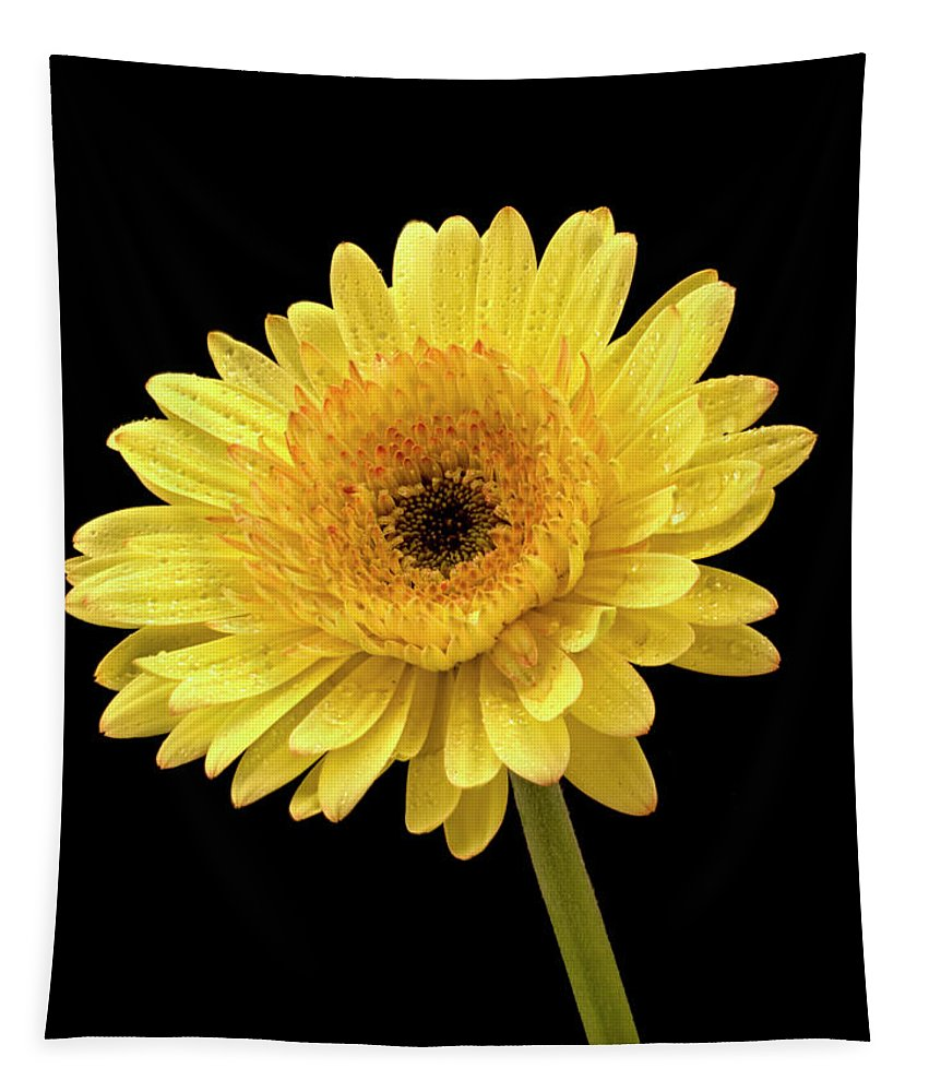 Jean Noren Tapestry featuring the photograph Gerbera Portrait by Jean Noren