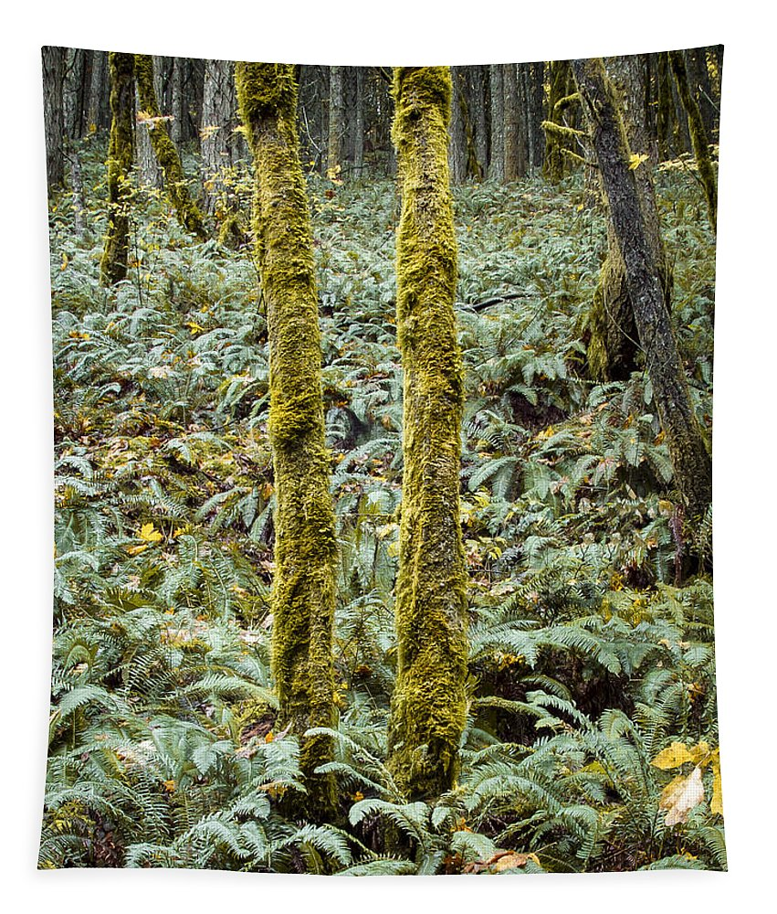 Fall Tapestry featuring the photograph Ghostly Forest by Jean Noren