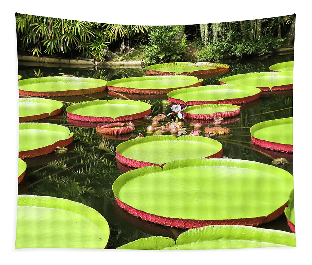 Exotic Tapestry featuring the photograph Giant Water Lily Platters by Zina Stromberg