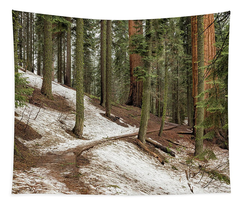 Giant Sequoia Tapestry featuring the photograph Giants Among Us by Belinda Greb
