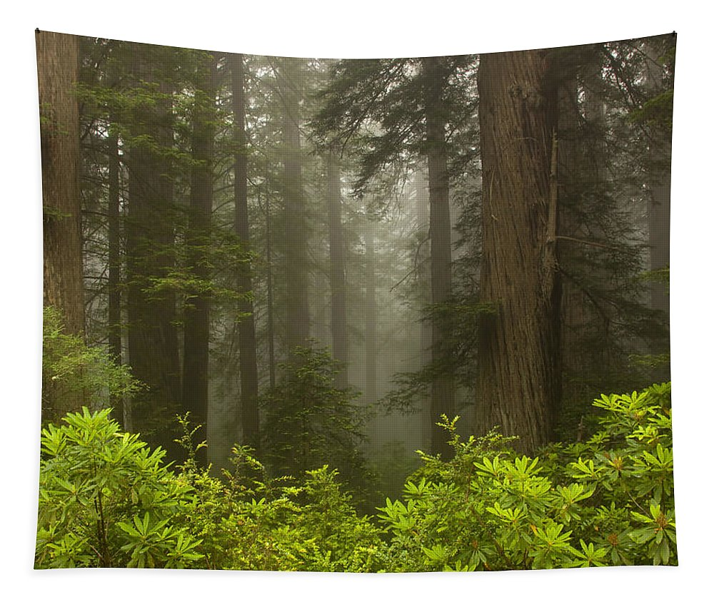 Redwood Tapestry featuring the photograph Giants In The Mist by Mike Dawson