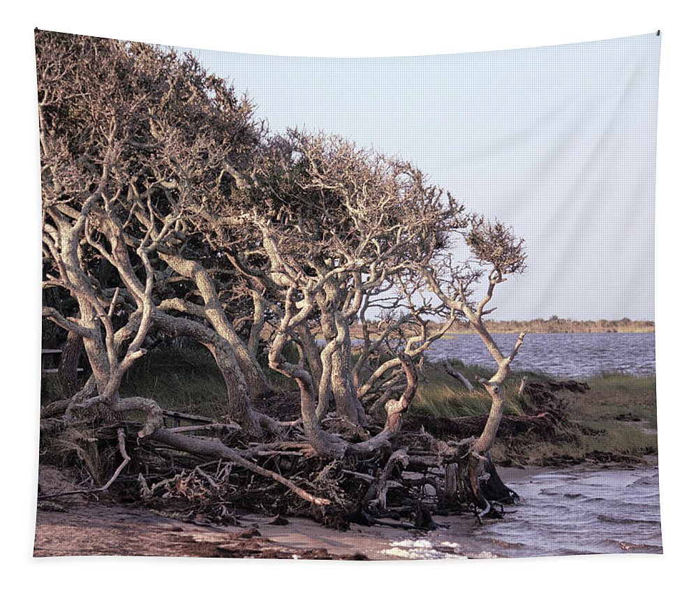Photography By Suzanne Stout Tapestry featuring the photograph Gnarled Oak Trees by Suzanne Stout