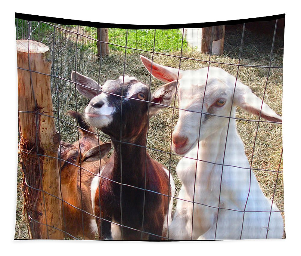 Young Goats Tapestry featuring the photograph Goats by Felipe Adan Lerma