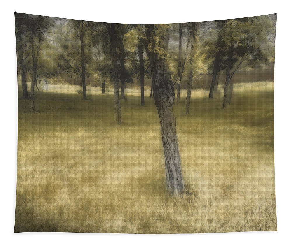 Trees Tapestry featuring the photograph Golden Grove by John Anderson