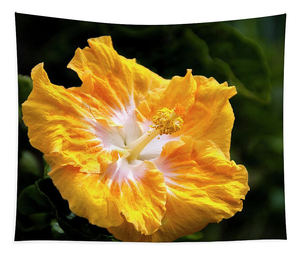 Gold Hibiscus Flower Kauai Hawaii Tapestry featuring the photograph Golden Hibiscus - Hawaii by Brian Harig