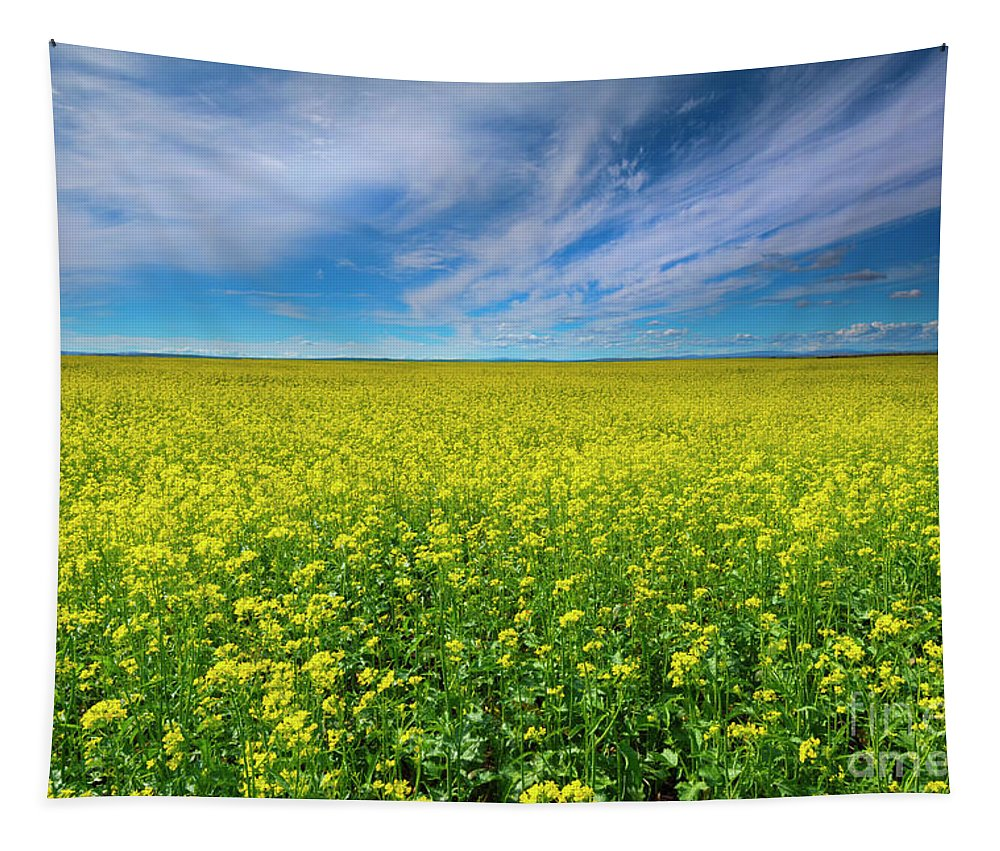 Rapeseed Tapestry featuring the photograph Golden Infinity by Mike Dawson