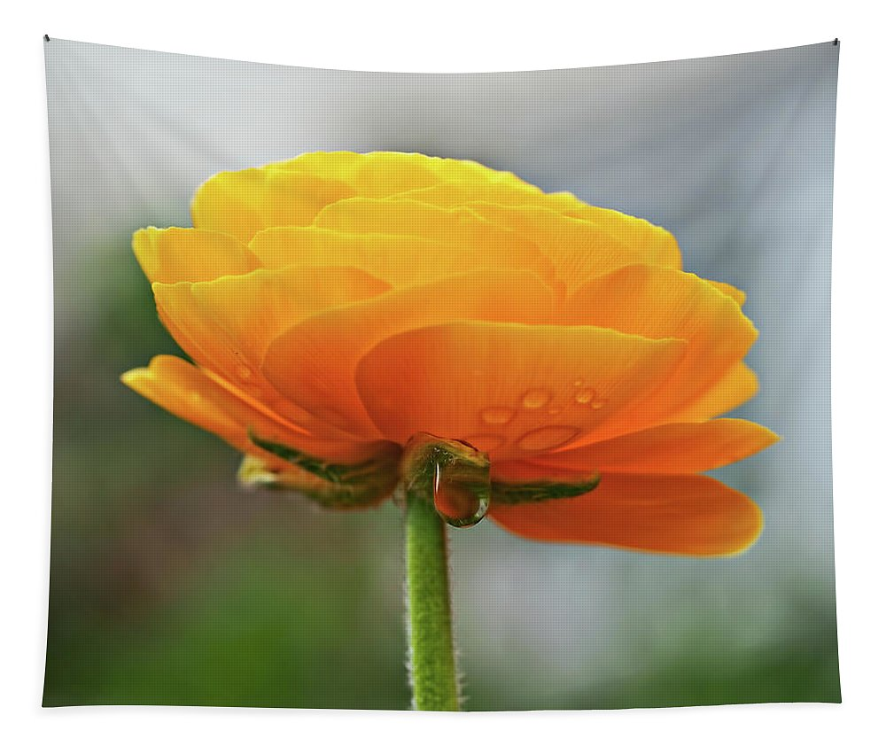 Ranunculus Tapestry featuring the photograph Golden Ranunculus by Susie Peek